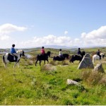 Carrowholly Stables & Trekking Centre